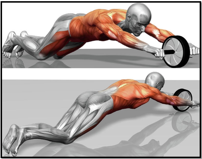 Exercise Roller for Muscle Press